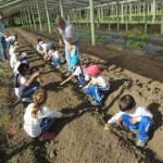 Escolares asisten a una granja